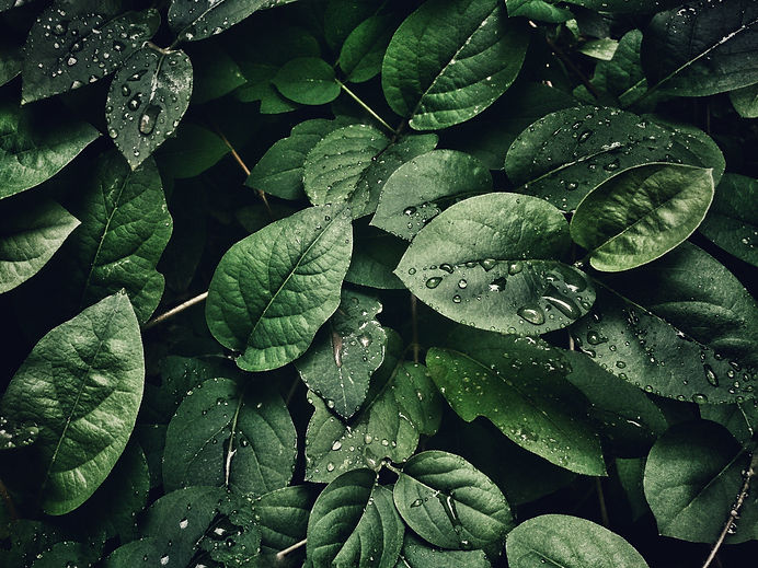 close-up-photography-of-leaves-with-drop
