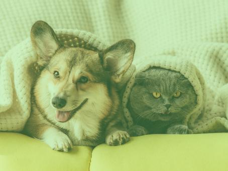 Biosan And Pet Care