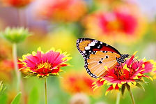 pexels-pixabay-462118.jpg