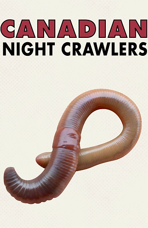 Canadian live night crawlers 1 dozen