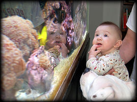 Photograph of infant and dog looking at fish