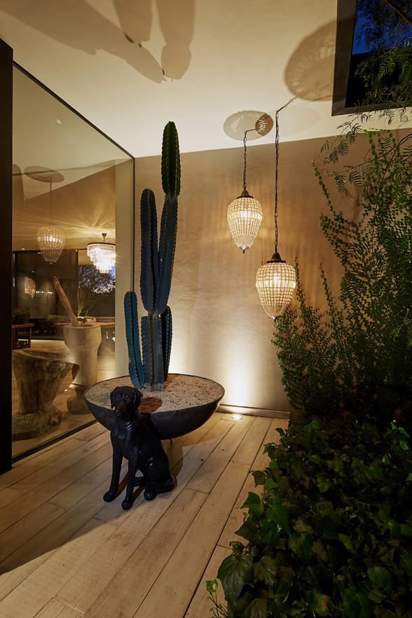 Perro-lampara-cactus