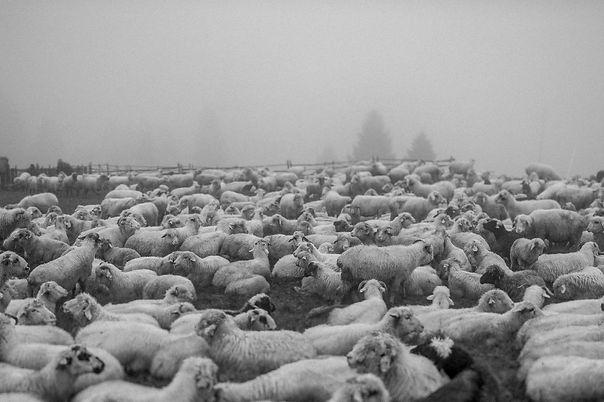 Pasterze-09791.jpg