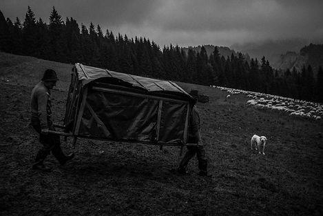 Shepherds_Krystian_Bielatowicz-04366.jpg