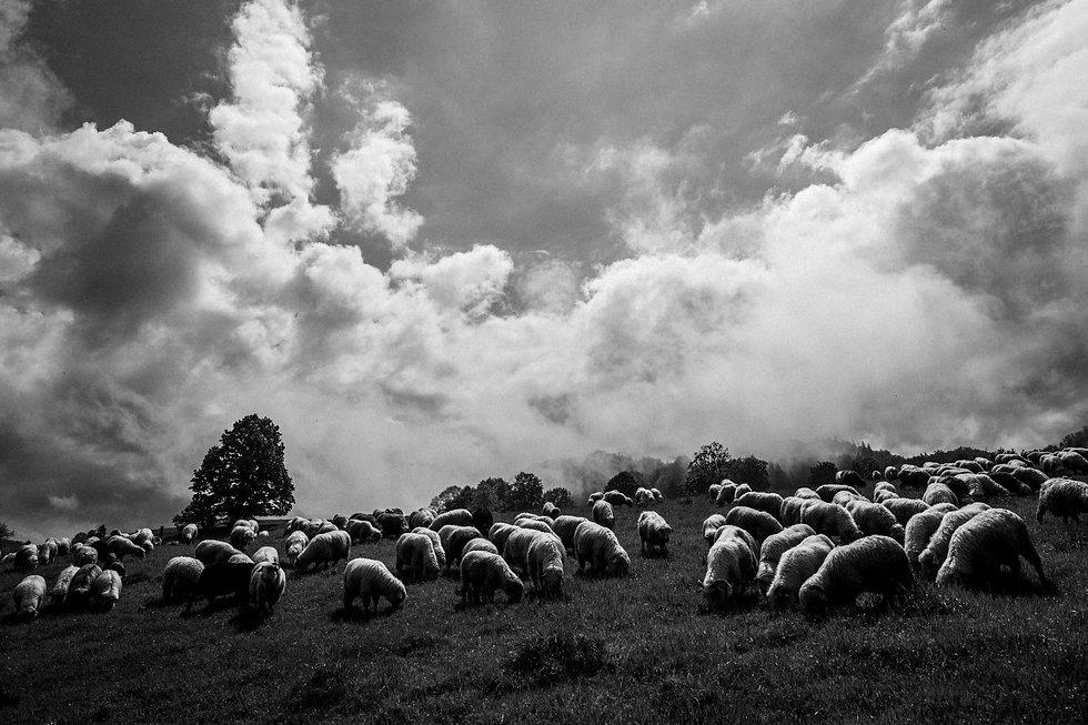 Shepherds-1027788.jpg
