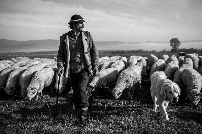Shepherds #01
