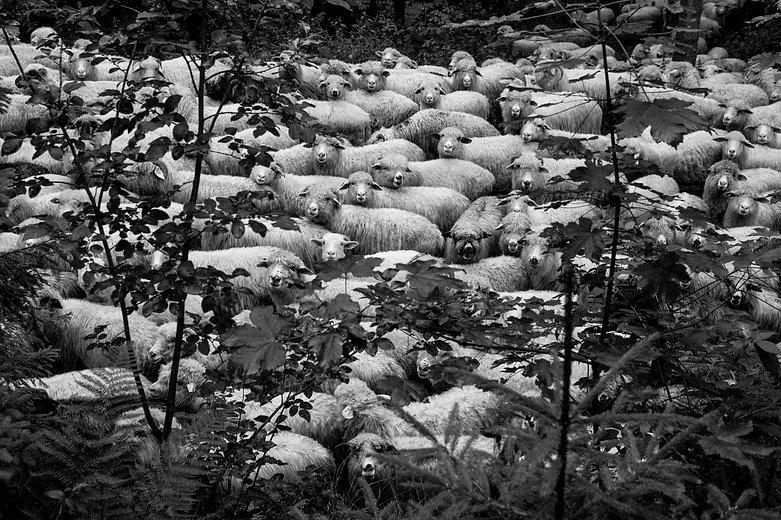 Pasterze-7175.jpg
