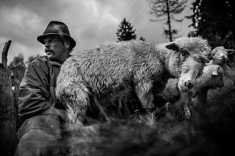 Shepherds_Krystian_Bielatowicz-04565.jpg