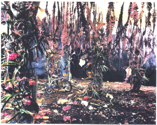 LAMEXOD 1983