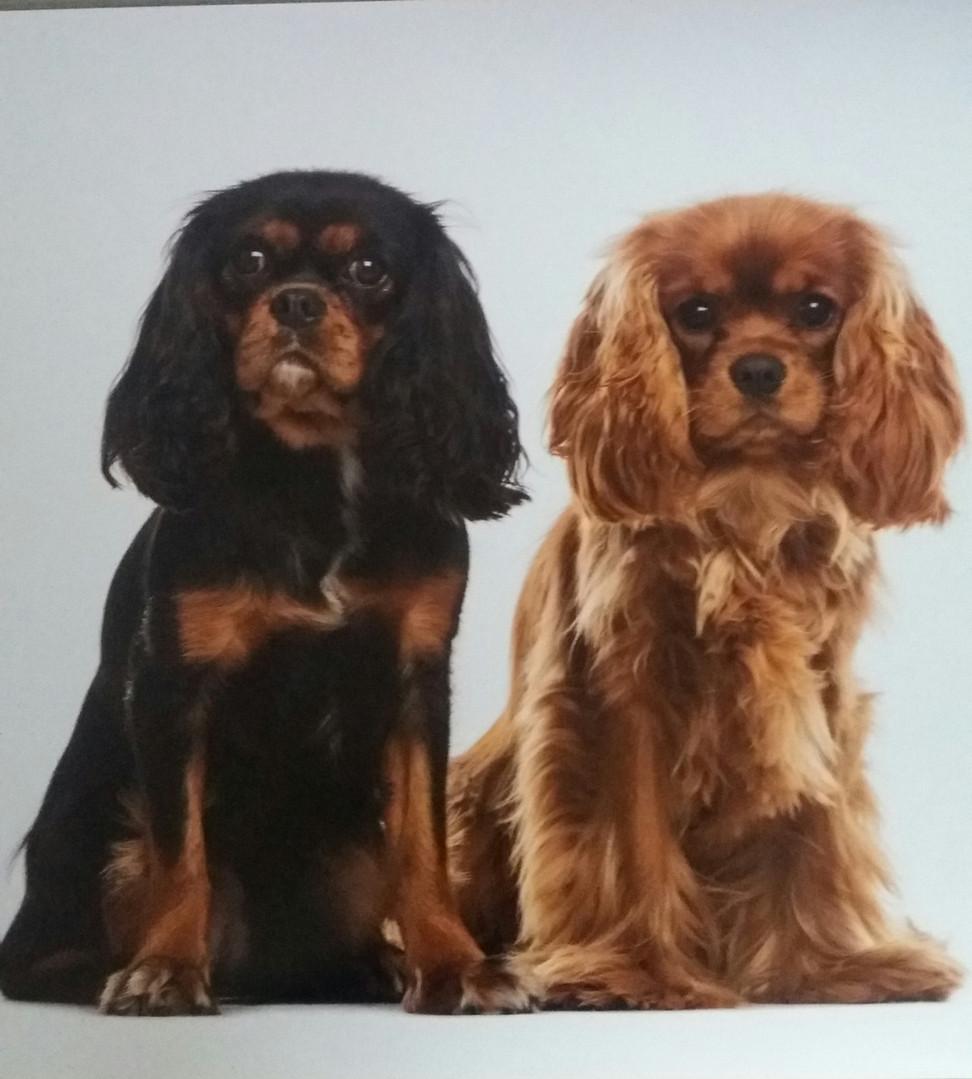 Nicky en Pepsy