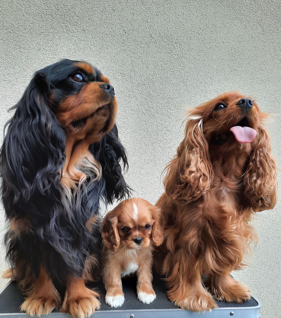 Remco, Pepsy en pup