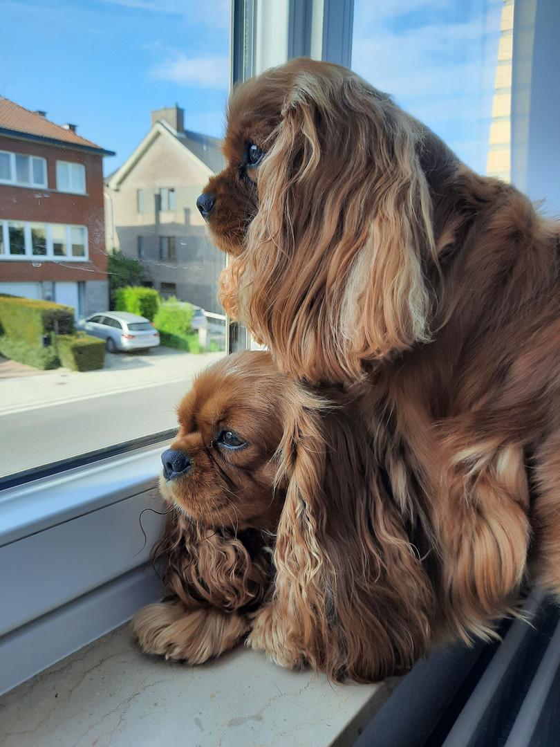 Pepsy en Roxy