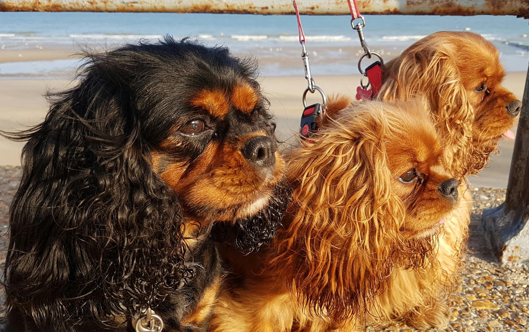Nicky, Roxy en Pepsy