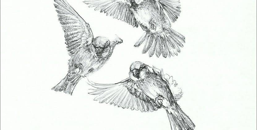 Study of Finches