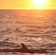 Winter Solstice Ocean Swim