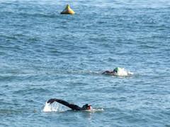 Doddi's Swims Suspended