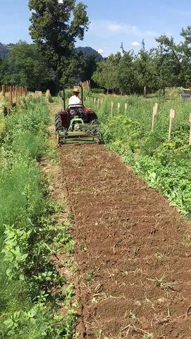 Aktuelle Situation auf dem Gemüsefeld von Michael Rauch