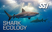 shark-ecology-1.jpg