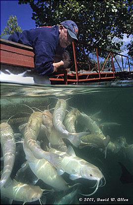 Fish at Mermet Springs