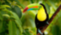 toucan_featured-400x230.jpg