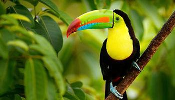 toucan_featured-400x230.jpg