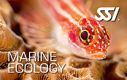marine-ecology.jpg
