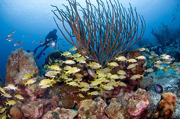 6-bonaire-h_underwater.jpg
