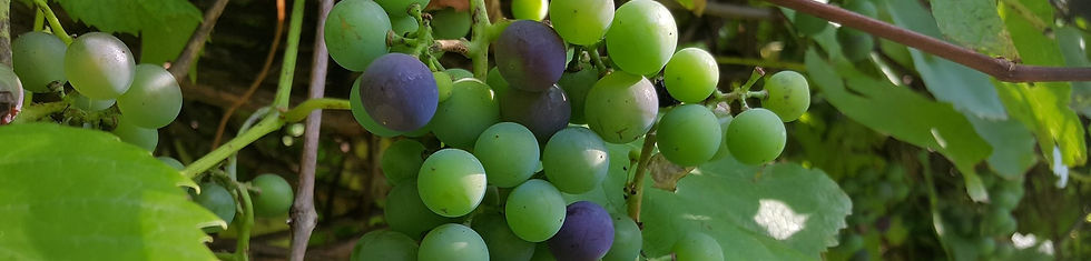 9月bunch-of-grapes-3617781_1920b.jpg