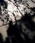 TINO-SAND-Transient Shadows-12.jpg