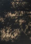 TINO-SAND-Transient Shadows-15.jpg