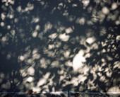 TINO-SAND-Transient Shadows-19.jpg