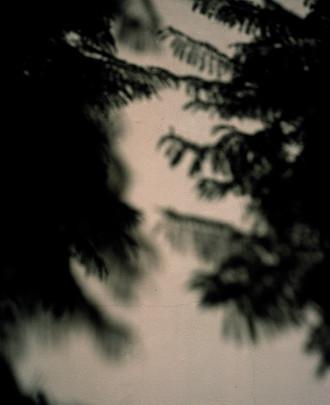 TINO-SAND-Transient Shadows-1.jpg