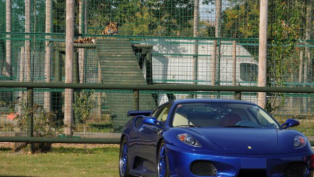 Ferrari cats!.JPG.jpg