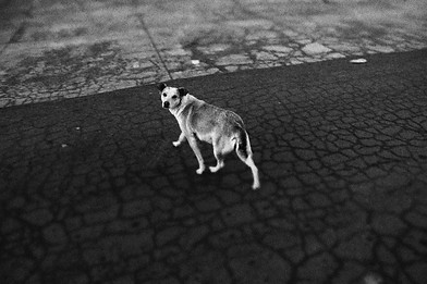 Hond in straat. // Dog in road.
