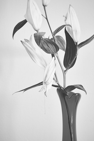 Untitled (Dying lillies in Monochrome #2)