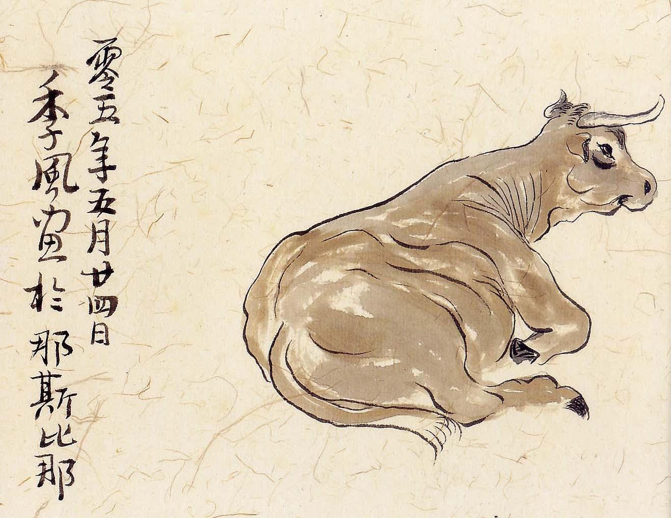 4.Vache Aubrac
