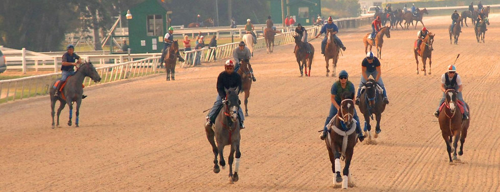 Horse Racing Workouts