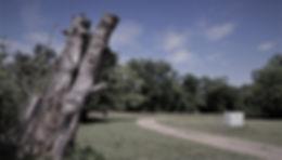 Nature's Sculpture.jpg