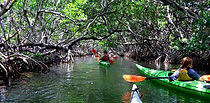 Mangrove Kayaking Pennekamp State Park Key Largo