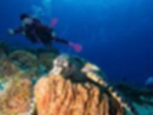 Dive House Cozumel