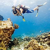 Open Water Diver Course Forms