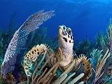 Cuba Turtle.jpg