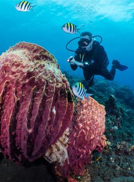 Sealife Sea Dragon Mini 900 Dive Light
