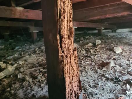 House Restumping Hilton WA