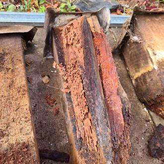 Termite Damaged Stumps Perth