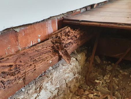 Termite Damage Subfloor Wembley WA