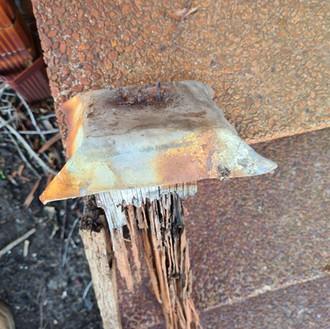 Termite Damaged Subfloor in Perth