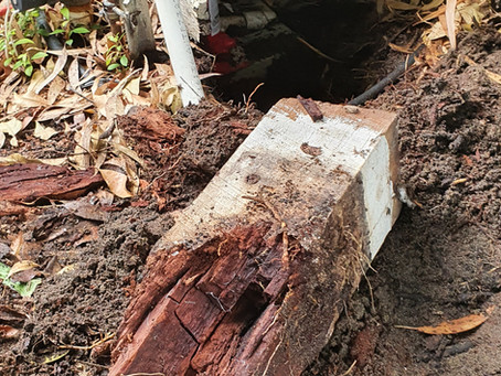 Timber Rot Stumps Perth