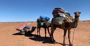Randonnée chamelière  dans le Sud Marocain pour François