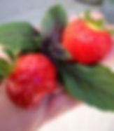 תותים גינת מאכל
